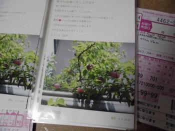 CIMG6222.JPG